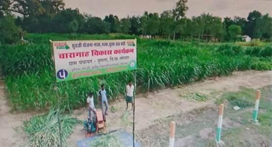 रायपुर  : सभी गौठानों में पशुओं के लिए हरे चारे का हो प्रबंध : मुख्यमंत्री श्री भूपेश बघेल