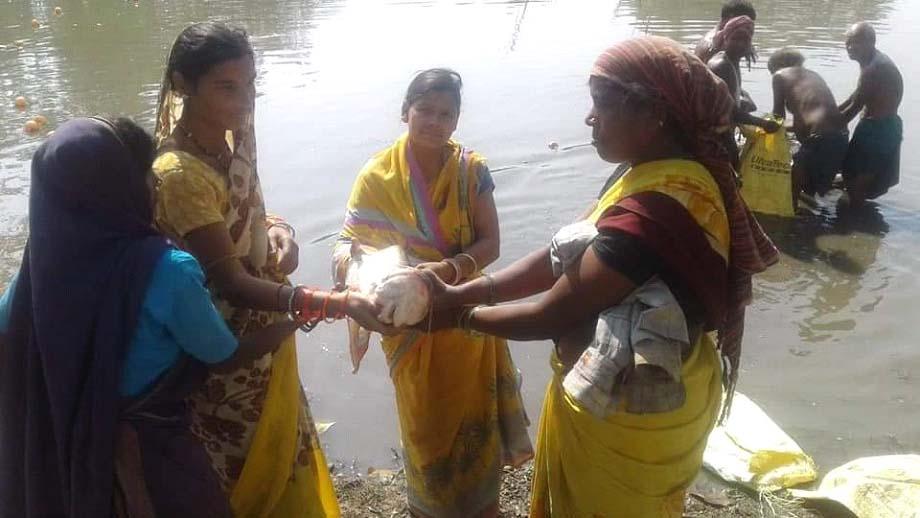रायगढ़ : बिहान योजना से जुड़ी महिलाओं ने मछली पालन से कमाया बढिय़ा मुनाफा