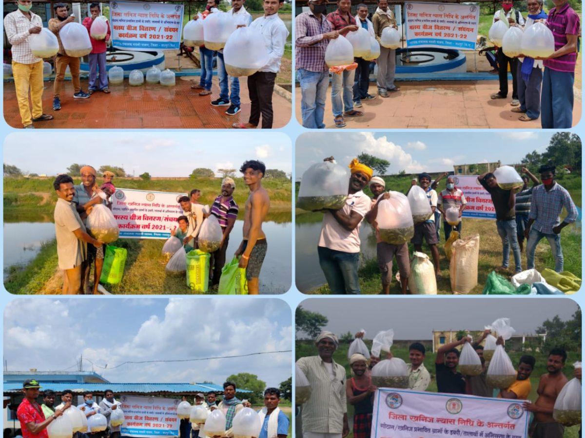 जशपुरनगर : गौठान ग्राम व खनिज उत्खनन प्रभावित ग्राम में  मनरेगा योजना अंतर्गत निर्मित डबरी के लिए मुफ्त में मछली बीज का  वितरण जारी