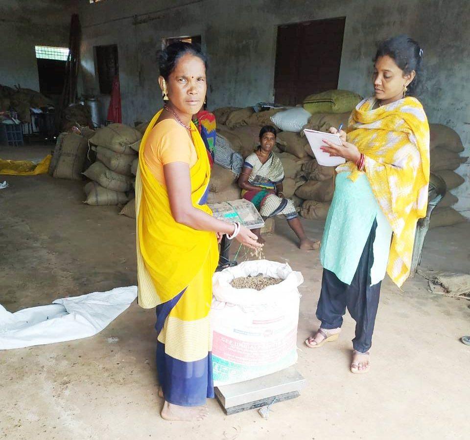 रायपुर : राज्य में साल बीज का संग्रहण जोरों पर