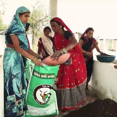 विशेष लेख : बिलासपुर : गौठानों से जुड़कर स्व सहायता समूह की महिलाएं संवार रहीं अपना भविष्य