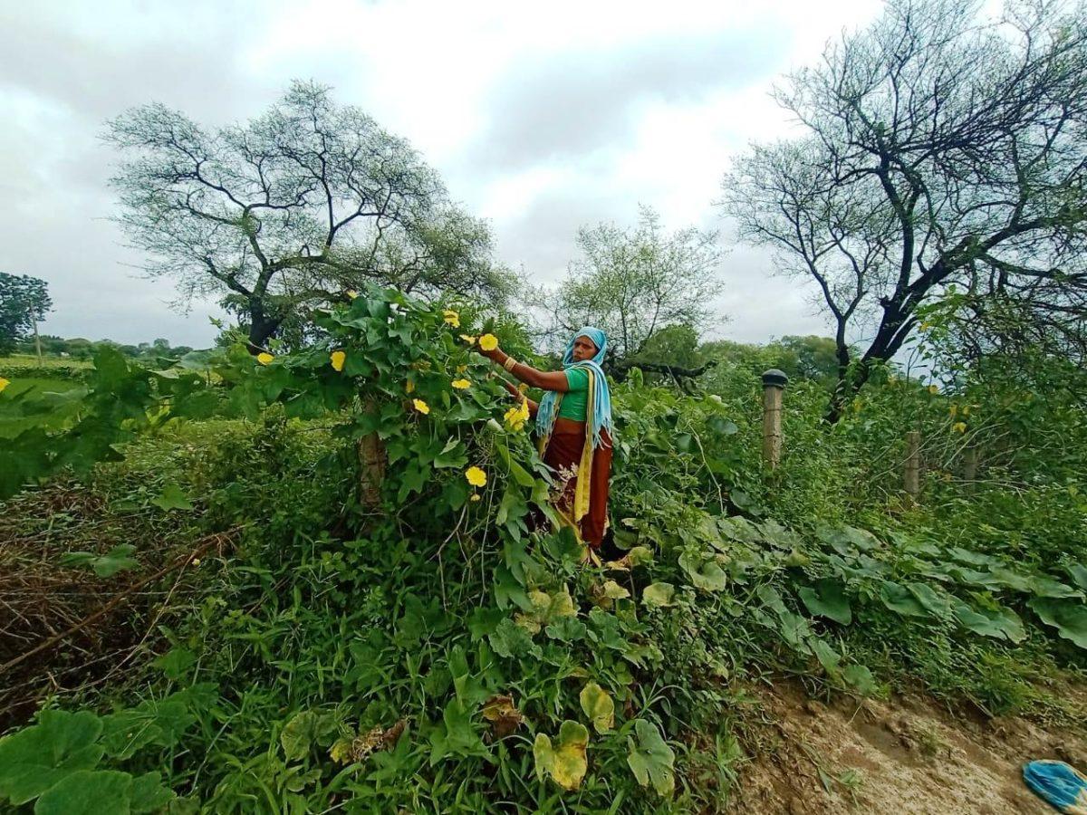 रायपुर : परेवाडीह गौठान में महिलाएं कर रही सब्जी की खेती