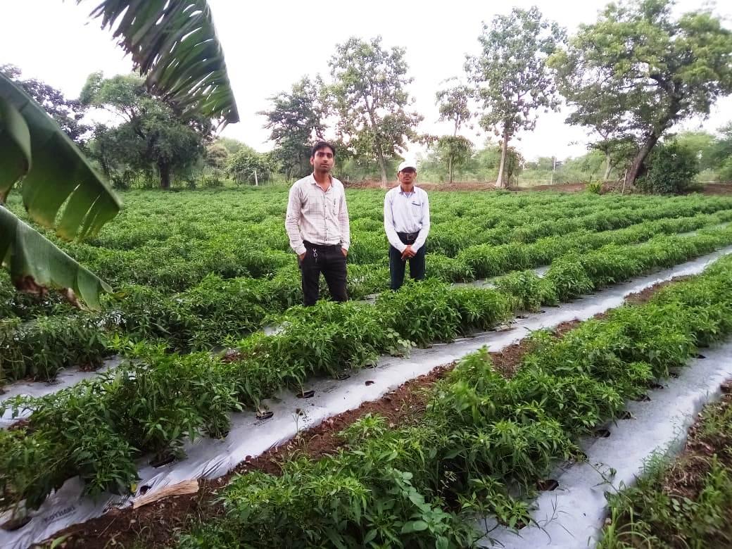 मुंगेली  :   मुंगेली जिले के श्री जन्मेजय नेताम करेला एवं मिर्च की खेती कर हुए आत्मनिर्भर