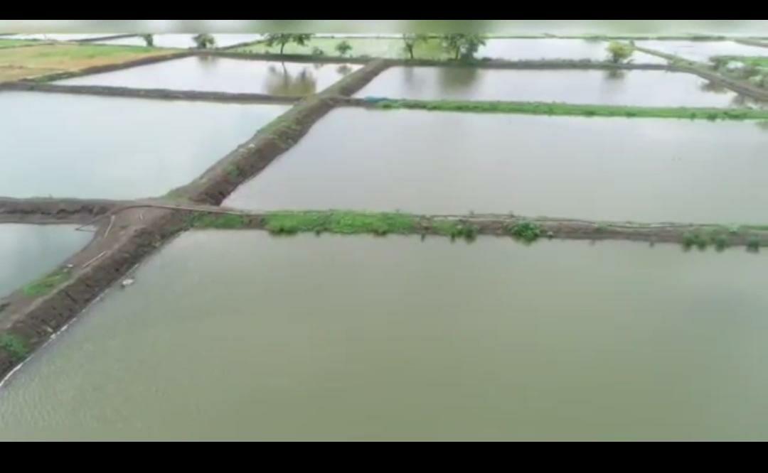 बेमेतरा  :  तालाब निर्माण से मत्स्य पालन कर किशोर ने अर्जित की 7.50 लाख रुपये की शुद्ध आय