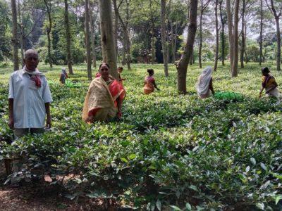 मुख्यमंत्री ने चाय-काफी की खेती को बढ़ावा देने छत्तीसगढ़ टी काफी बोर्ड का किया गठन
