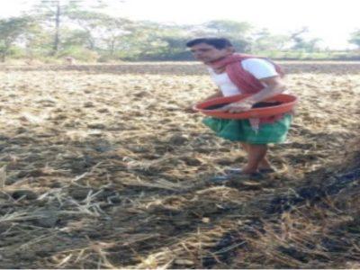 रायपुर : जैविक खेती और दलहन-तिलहन से किसानों में आ रही अर्थिक समृद्धि